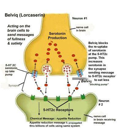 Belviq Acts on Serotonin Receptors in the Hypothalamus