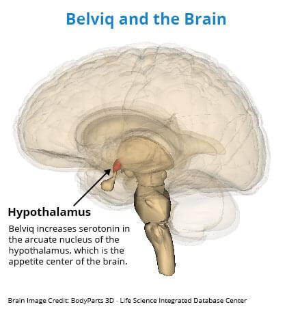 Belviq Hypothalamus Brain