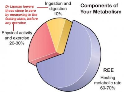Metabolism Components