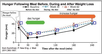 Hunger is increased after weight loss