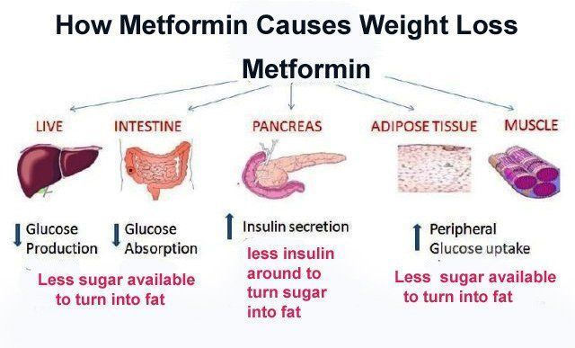 metformin works to produce weight loss